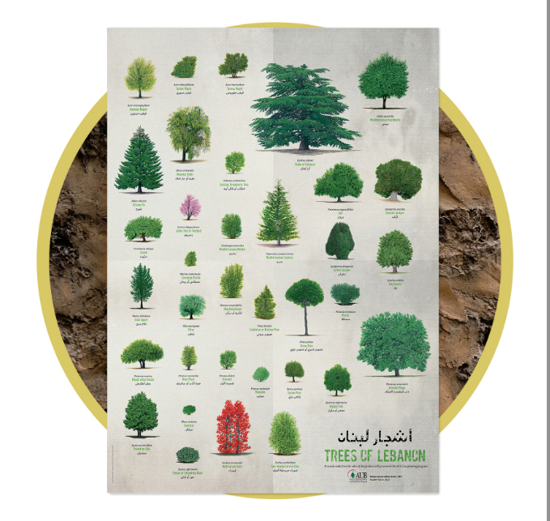 Picture of Tree Poster